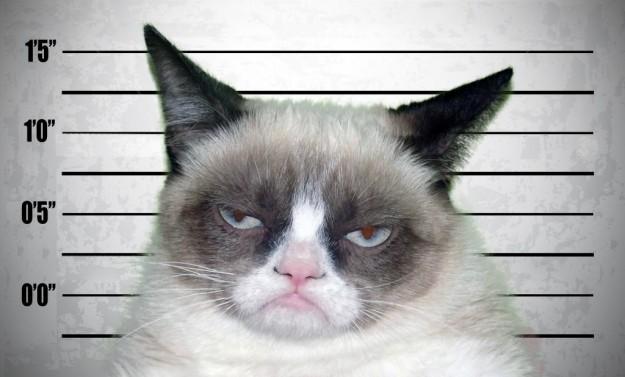 Grumpy cat - lineup